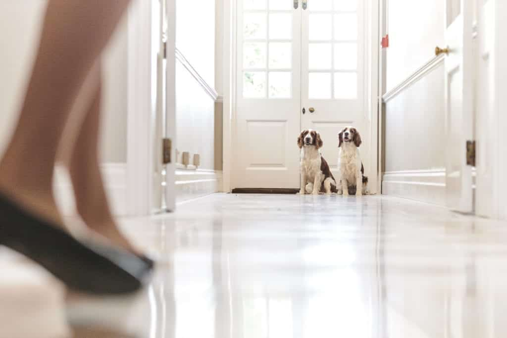 Portraiture photo of two dogs in the background - Hospitality Photographic