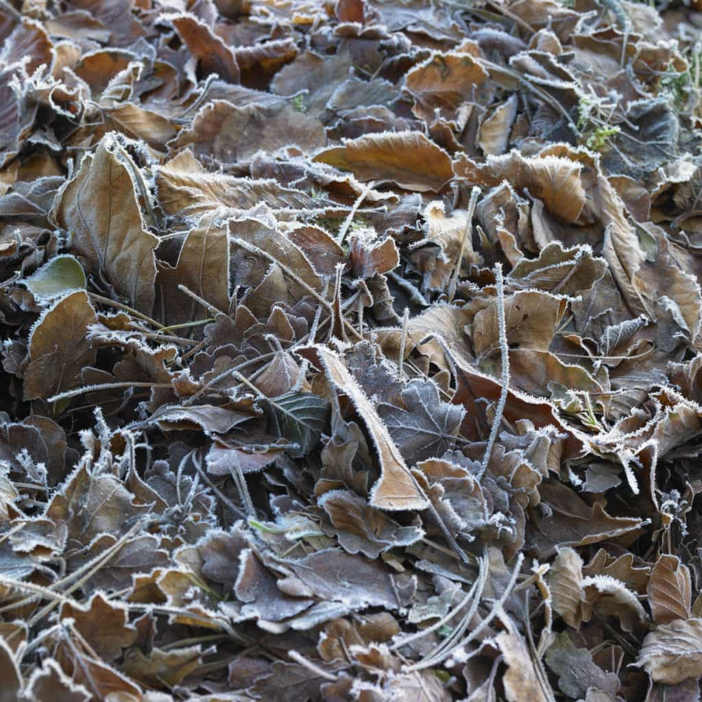 Wall Art of frosty leaves - Hospitality Photographic
