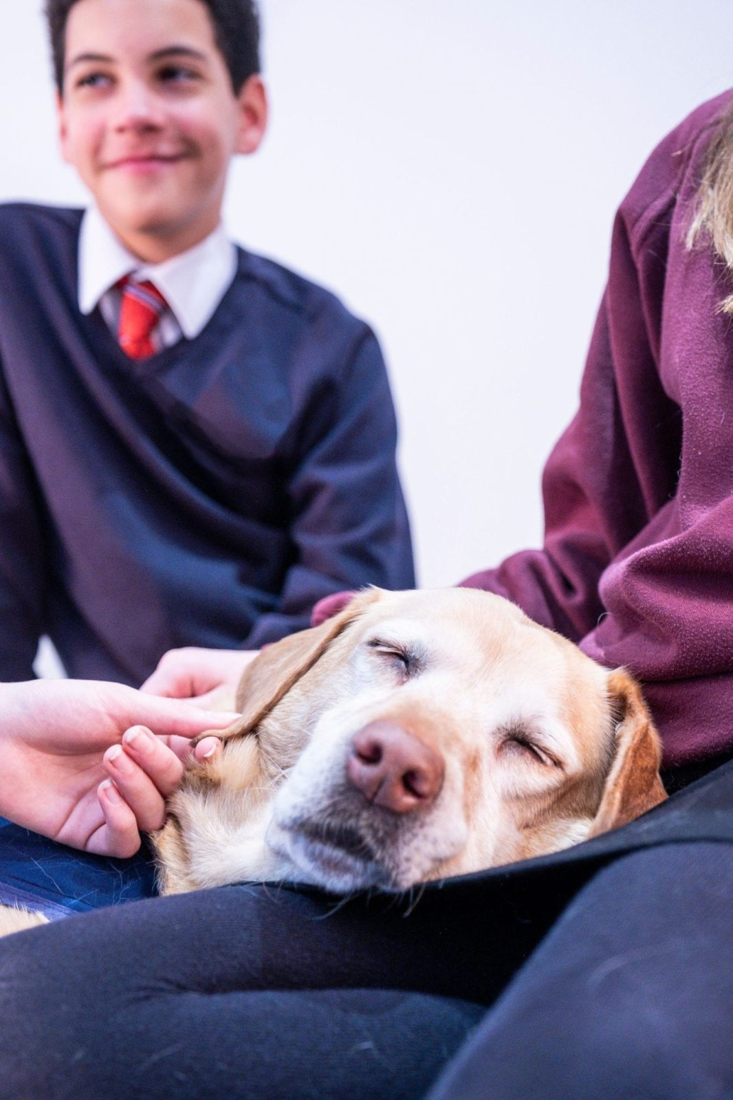 Portrait of pupils accompanied by a CAL dog - www.canineassistedlearning.com